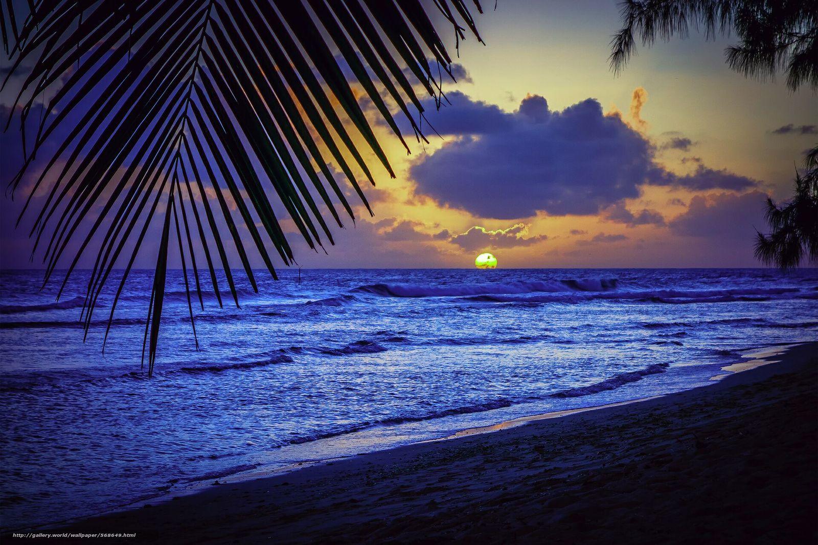 Скачать обои пляж,  пальмы,  карибское море,  силуэт бесплатно для рабочего стола в разрешении 1920x1280 — картинка №568649