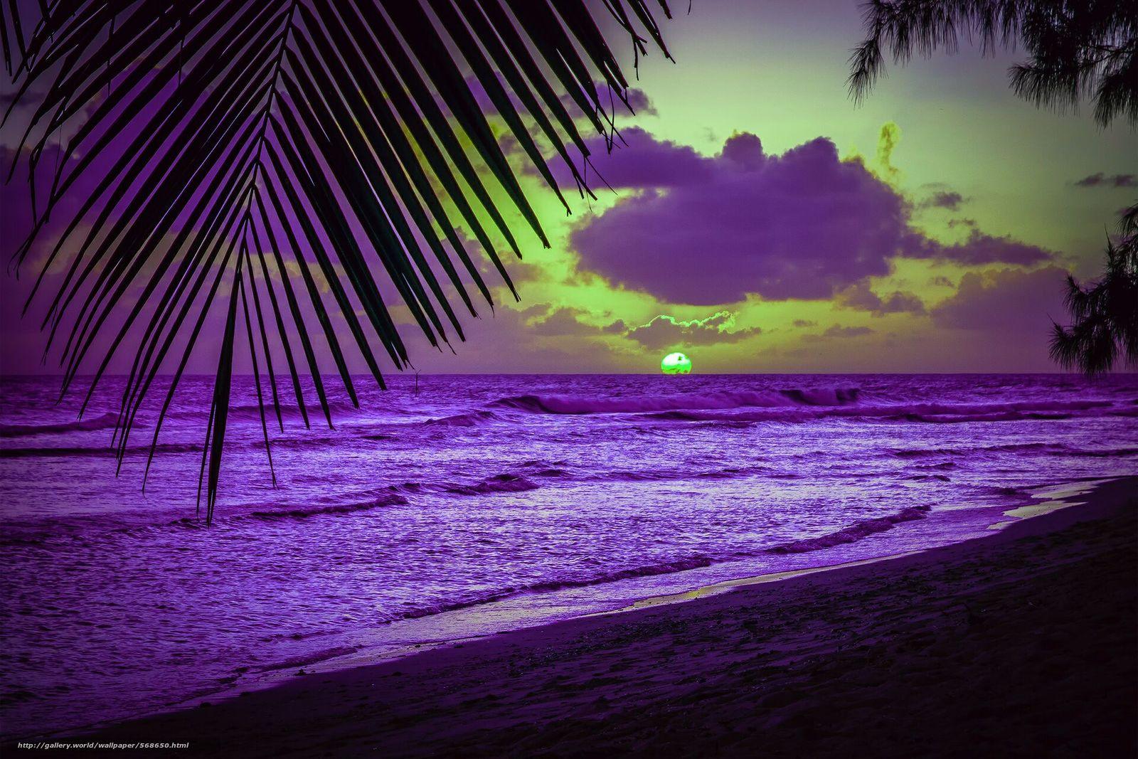 Скачать обои пляж,  пальмы,  карибское море,  силуэт бесплатно для рабочего стола в разрешении 1920x1280 — картинка №568650