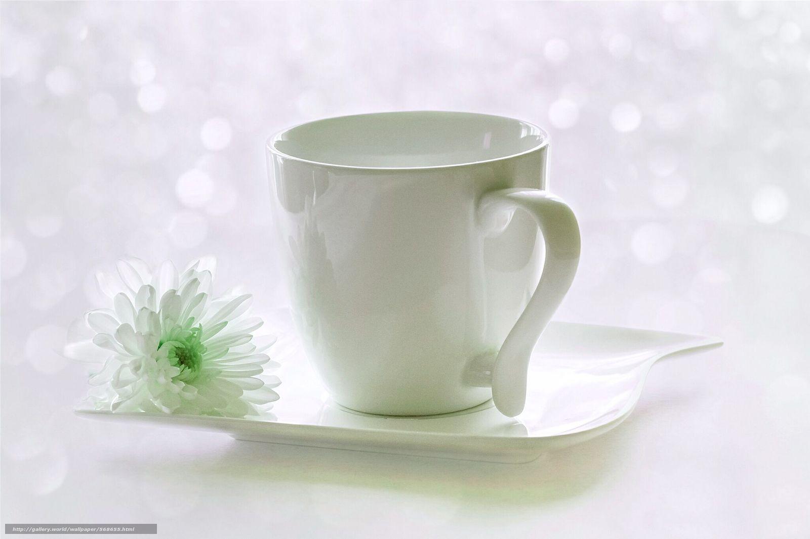 下载壁纸 花,  杯,  菊花,  茶托 免费为您的桌面分辨率的壁纸 2048x1365 — 图片 №568655