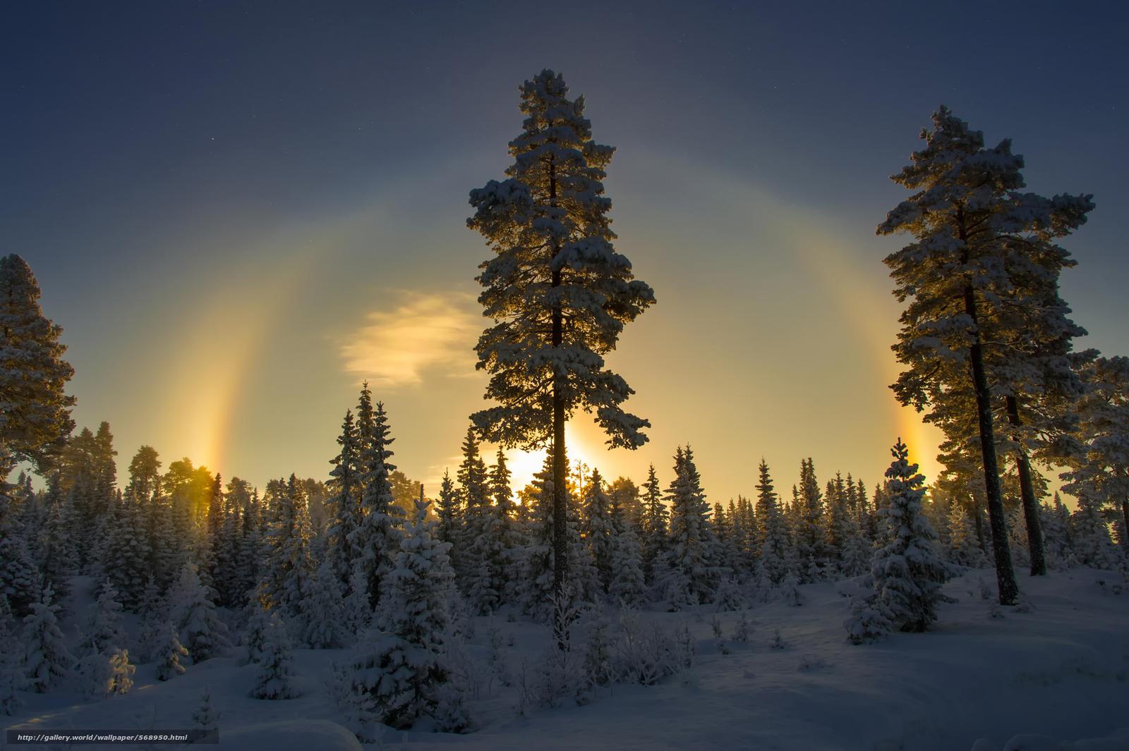 Scaricare gli sfondi alberi di natale inverno nevicata for Desktop gratis inverno