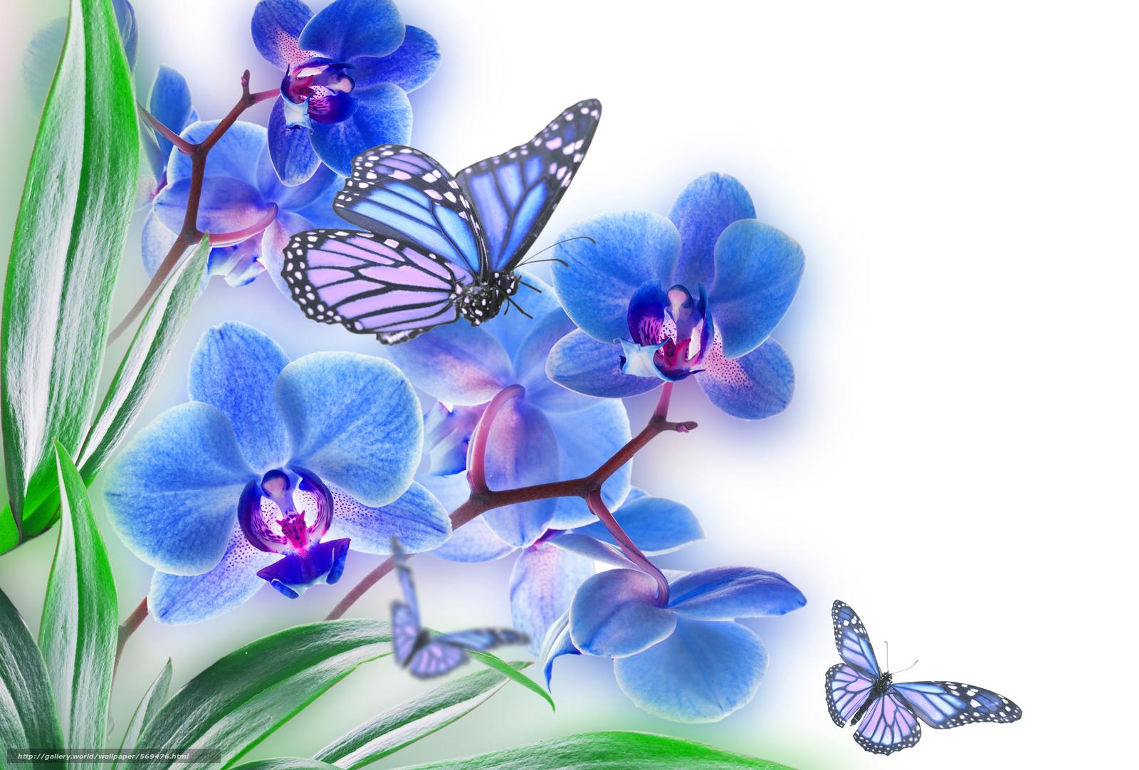 Скачать обои лист,  цветок,  природа,  орхидея бесплатно для рабочего стола в разрешении 2500x1690 — картинка №569476