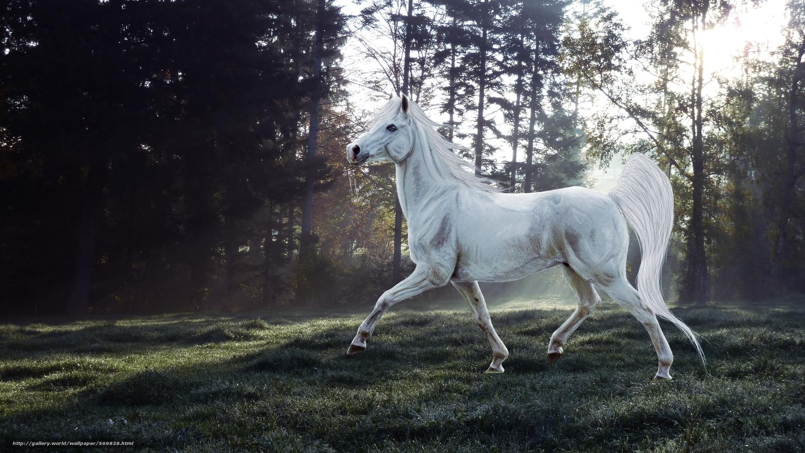 Download wallpaper horse,  3d,  art free desktop wallpaper in the resolution 4320x2432 — picture №569828