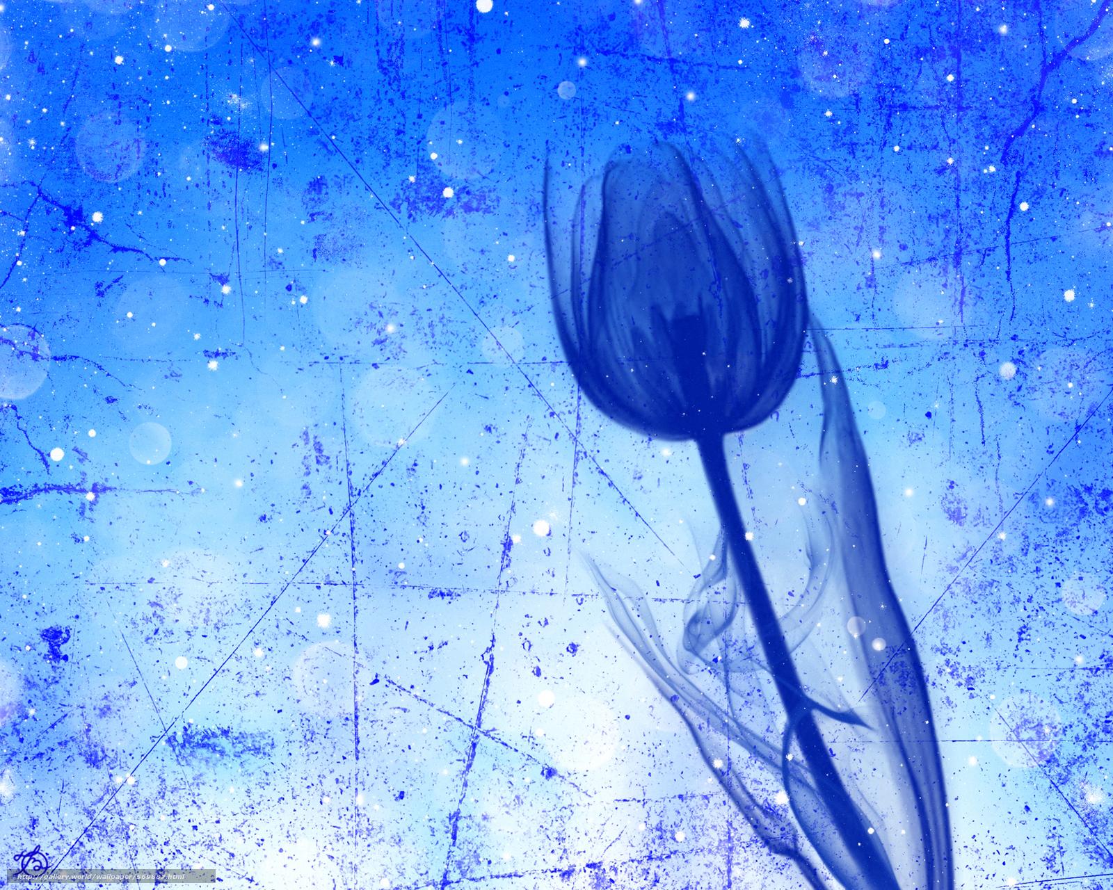 下载壁纸 郁金香,  花,  秆,  触摸 免费为您的桌面分辨率的壁纸 1920x1536 — 图片 №569887