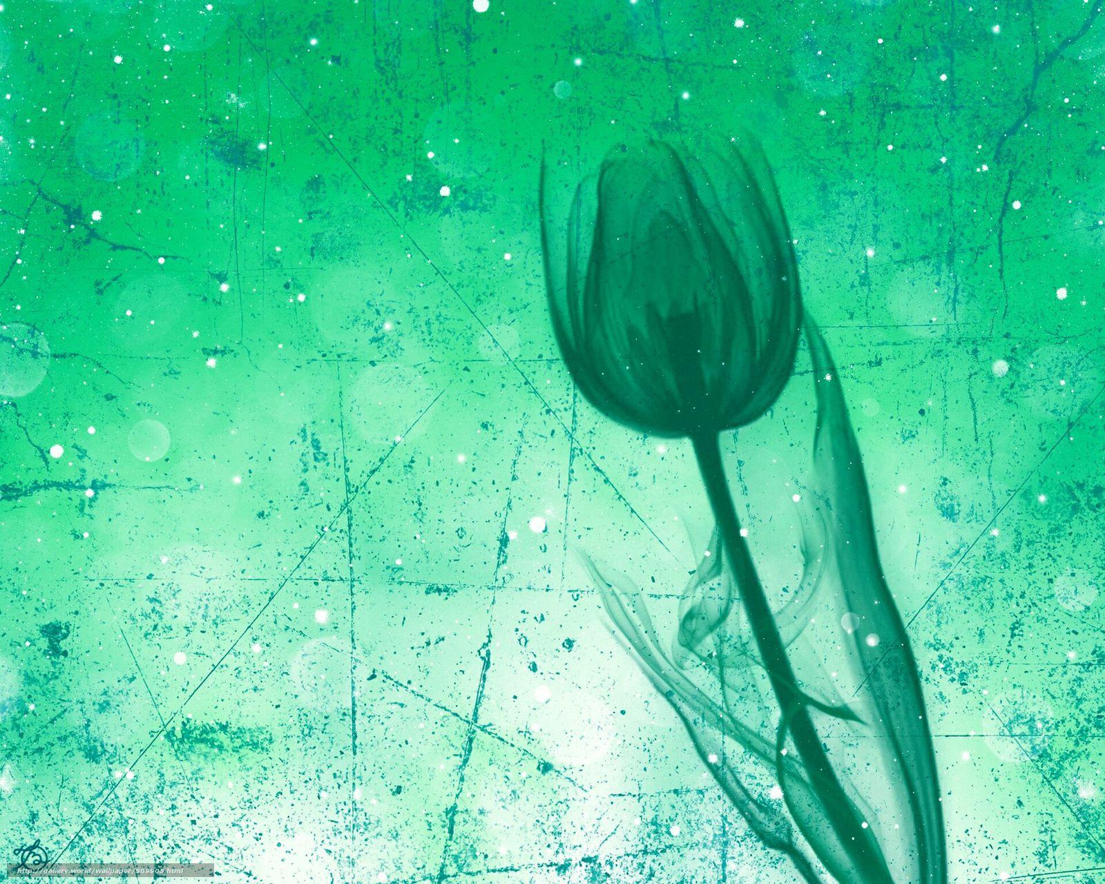 下载壁纸 郁金香,  花,  秆,  触摸 免费为您的桌面分辨率的壁纸 1920x1536 — 图片 №569905