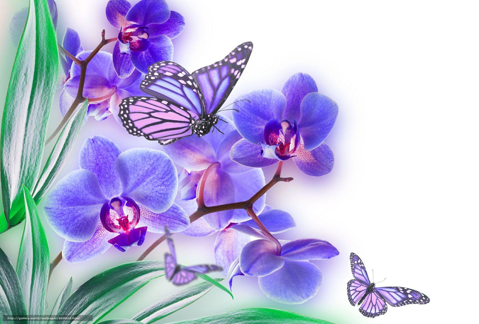 Descargar gratis lista,  flor,  naturaleza,  orquídea Fondos de escritorio en la resolucin 2500x1690 — imagen №569918