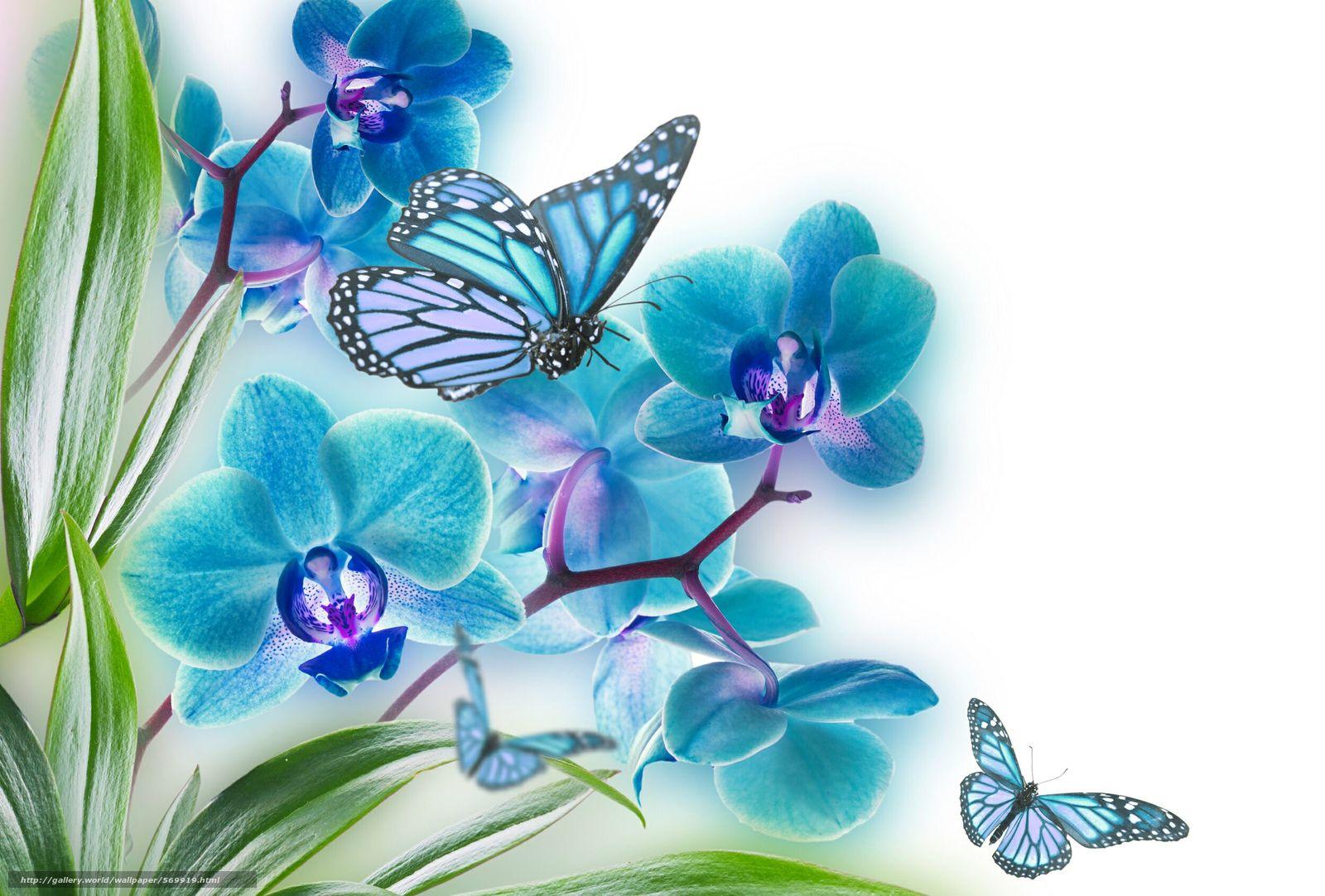 Скачать обои лист,  цветок,  природа,  орхидея бесплатно для рабочего стола в разрешении 2500x1690 — картинка №569919