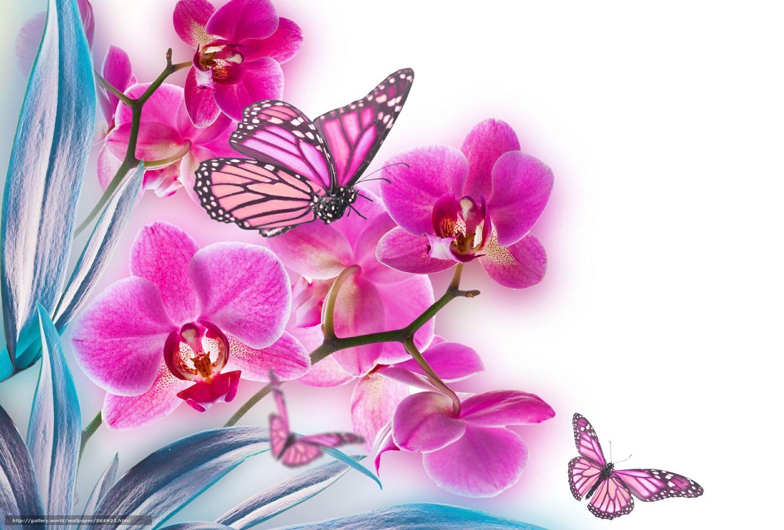 Скачать обои лист,  цветок,  природа,  орхидея бесплатно для рабочего стола в разрешении 2500x1690 — картинка №569922