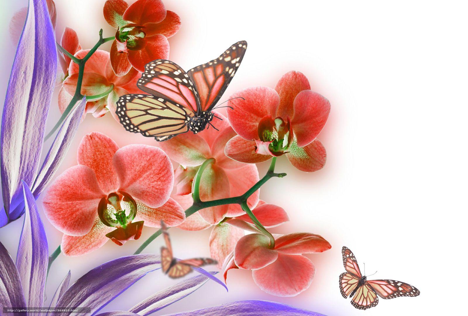 Скачать обои лист,  цветок,  природа,  орхидея бесплатно для рабочего стола в разрешении 2500x1690 — картинка №569923