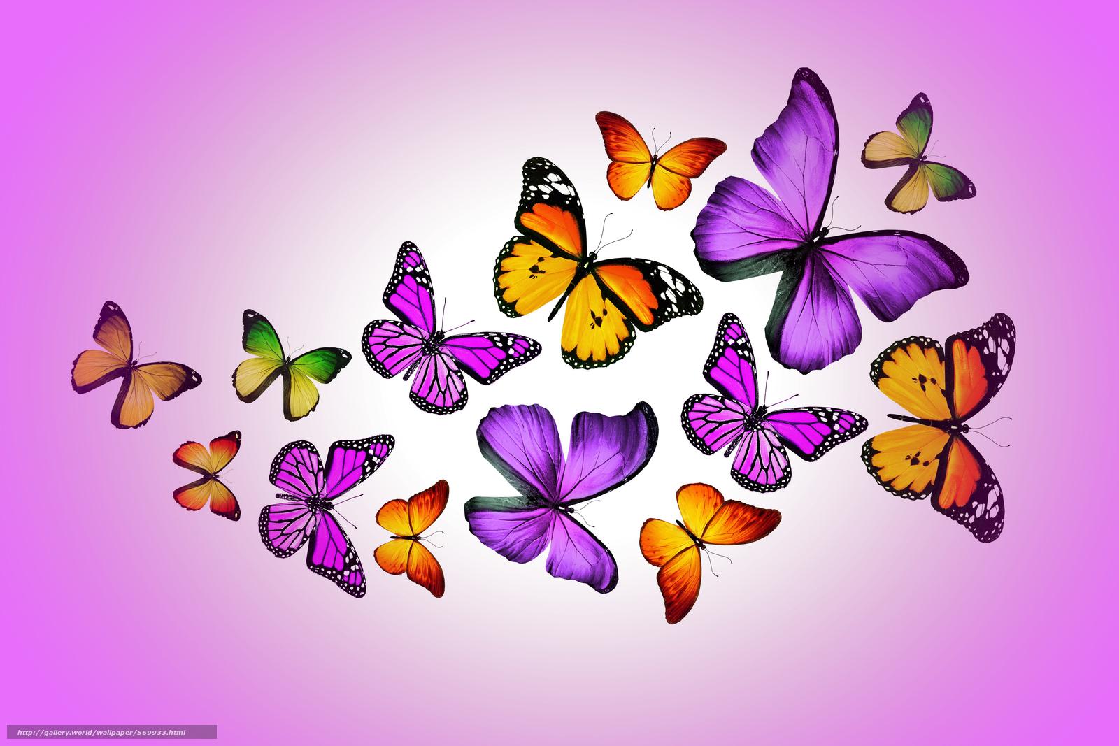 Scaricare gli sfondi farfalle sfondi gratis per la for Immagini farfalle per desktop