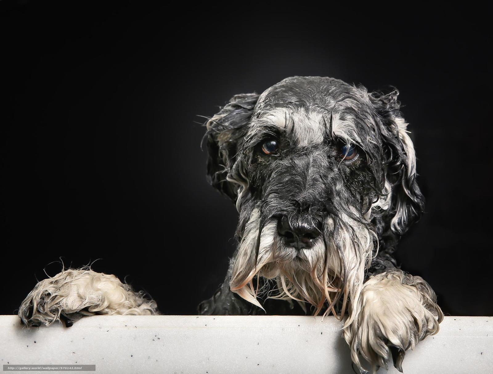 Скачать обои взгляд,  собака,  пёсик,  ванна бесплатно для рабочего стола в разрешении 2048x1553 — картинка №570142