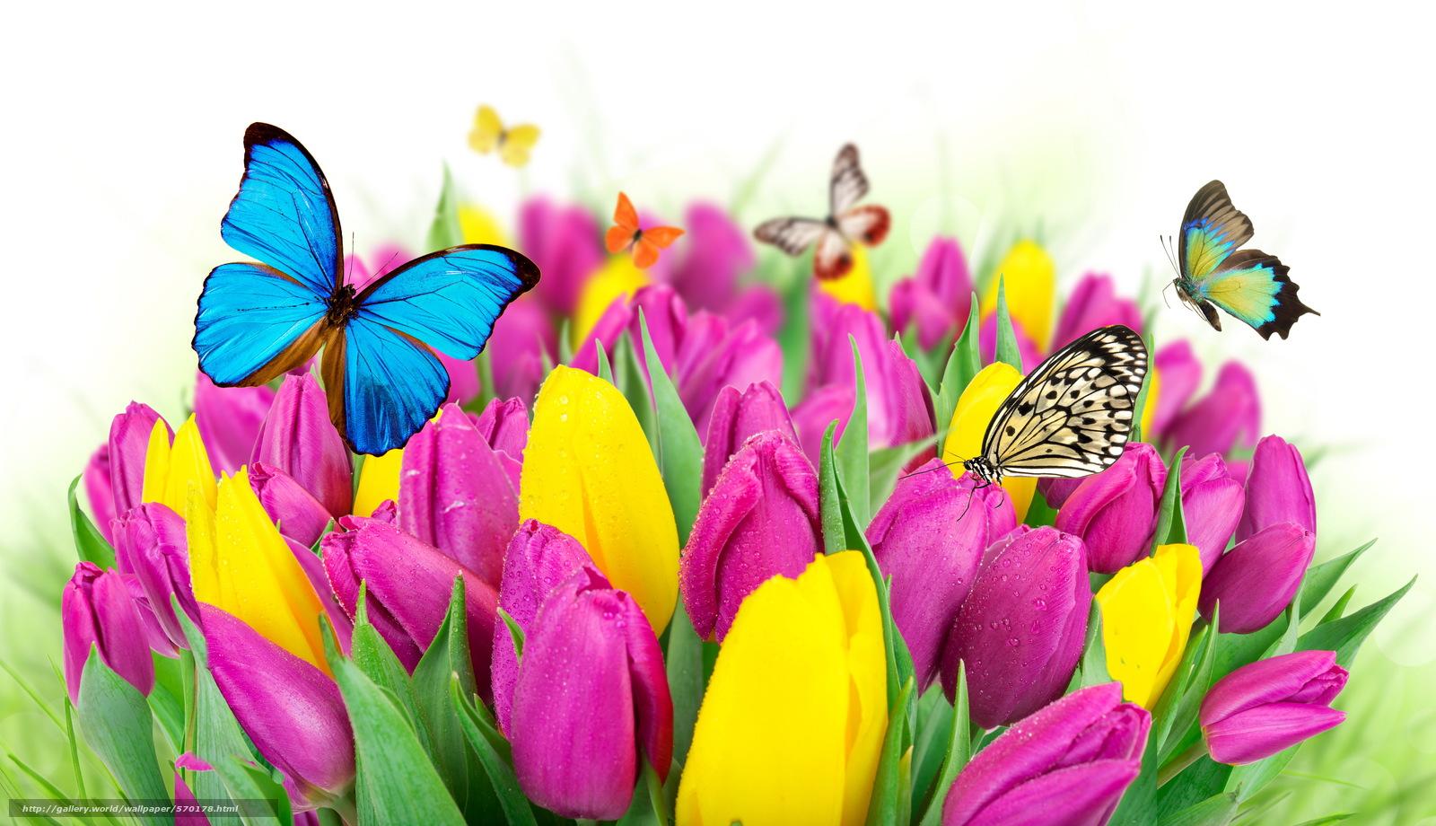 Tlcharger fond d 39 ecran papillons spring fleurs tulipes for Sfondi desktop gratis primavera