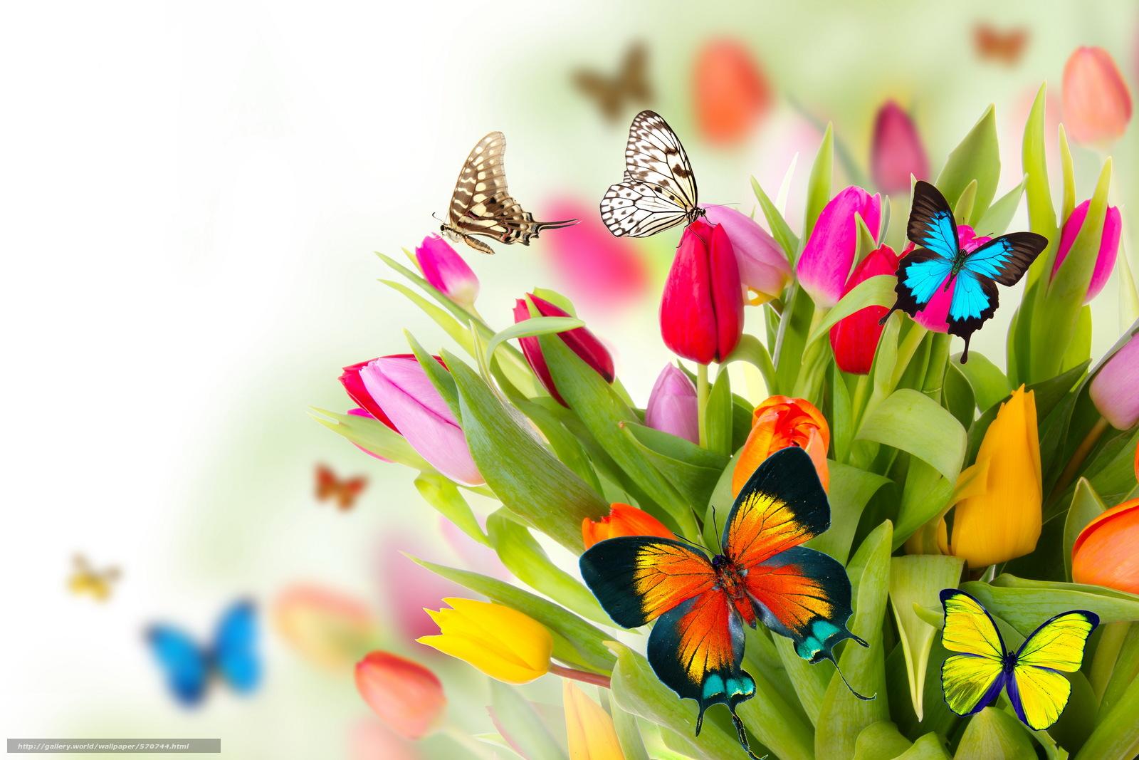 Scaricare gli sfondi primavera fiori farfalle tulipani for Sfondi farfalle gratis