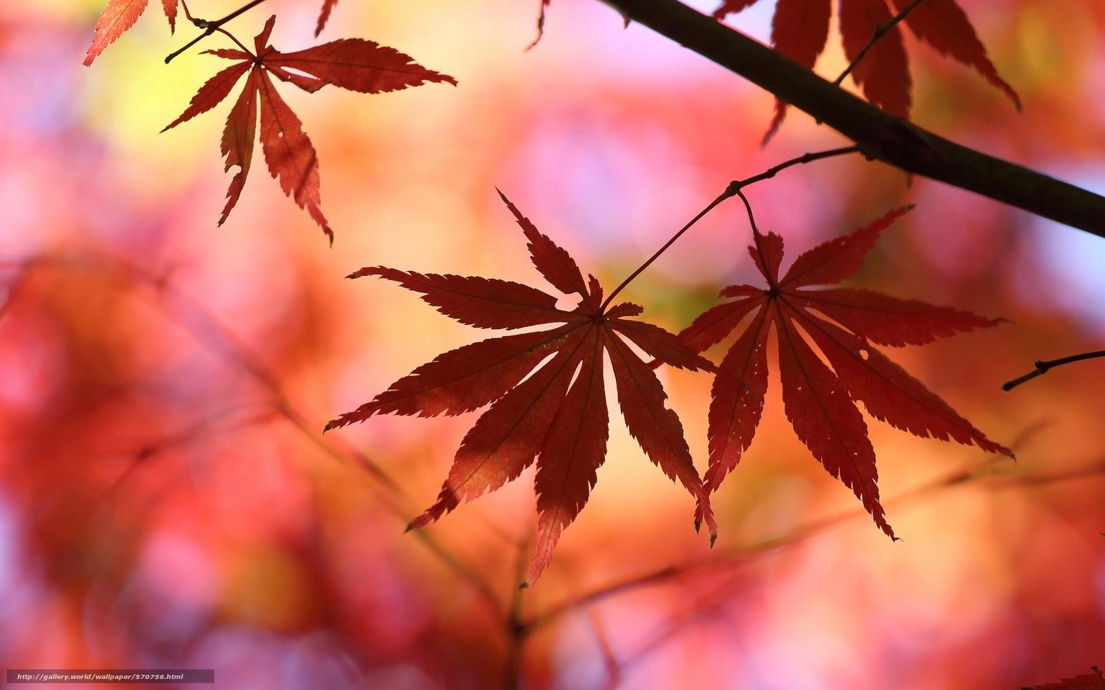 Download wallpaper trees,  Widescreen,  wallpaper,  tree free desktop wallpaper in the resolution 1920x1200 — picture №570756