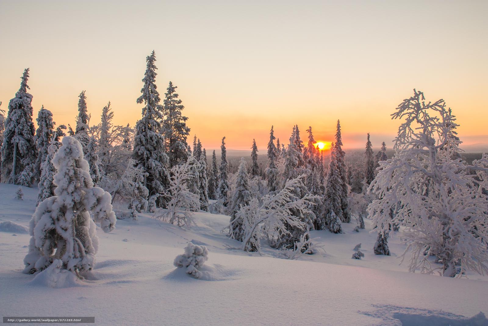 Scaricare gli sfondi lapponia tramonto inverno alberi for Immagini inverno sfondi