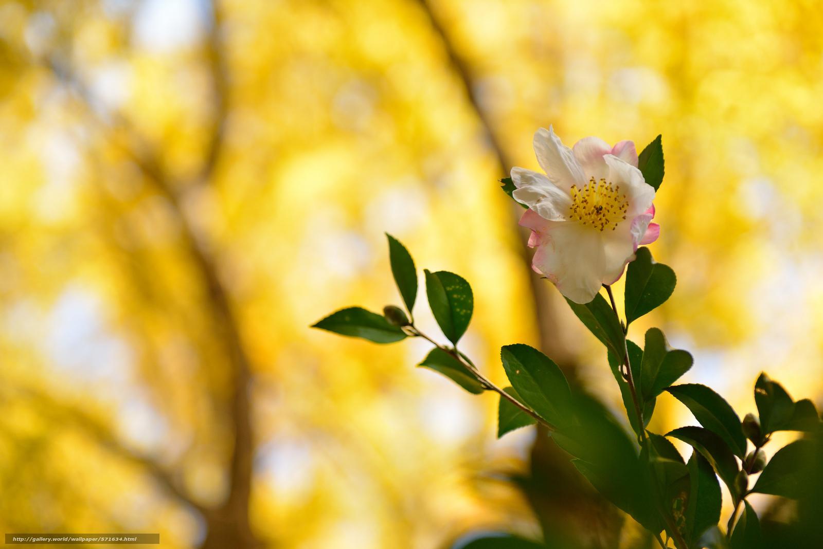Скачать обои цветок,  фон,  ветки,  листья бесплатно для рабочего стола в разрешении 2048x1367 — картинка №571634