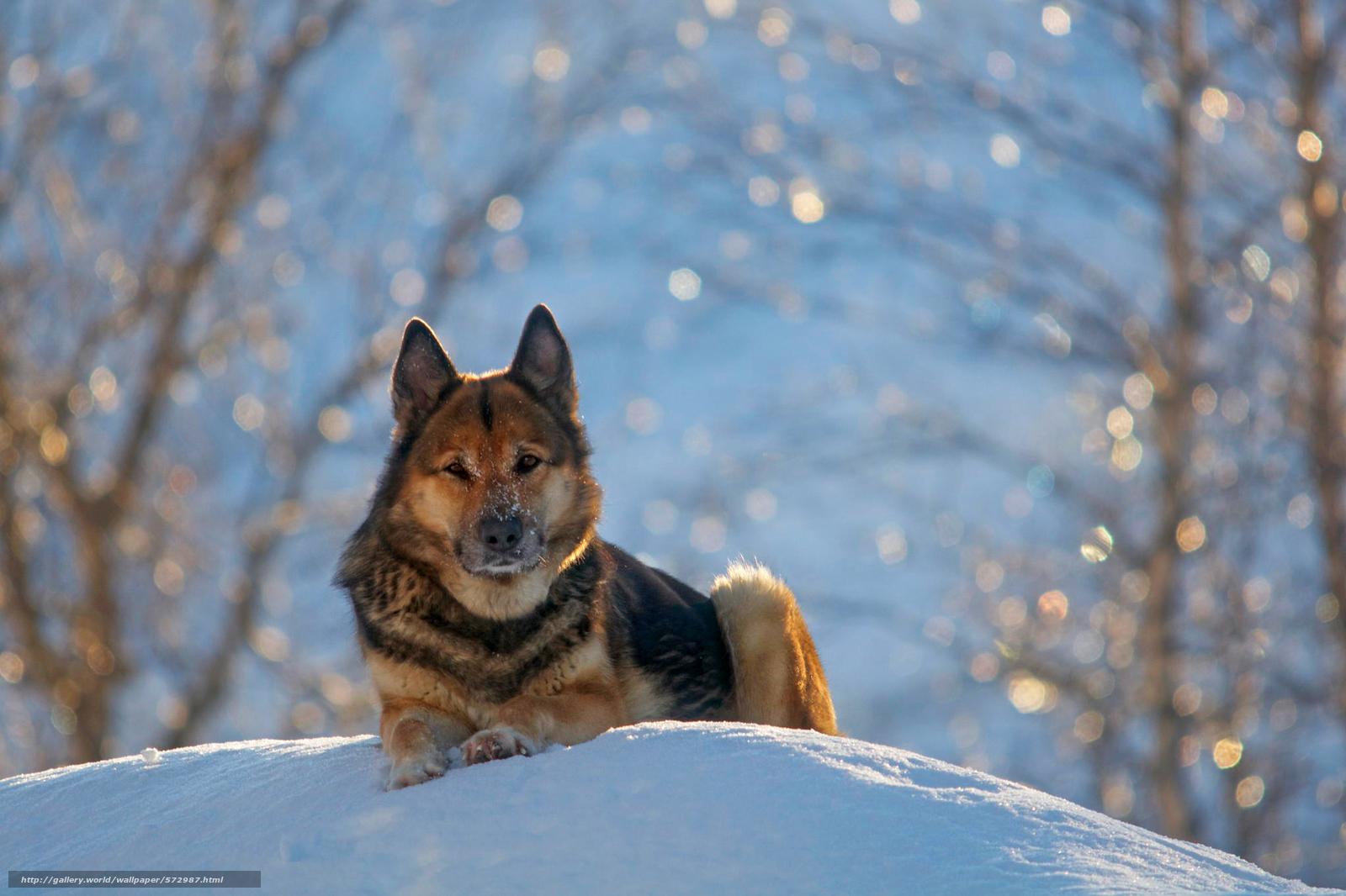 Scaricare gli sfondi natura nevicata pastore tedesco for Immagini inverno sfondi