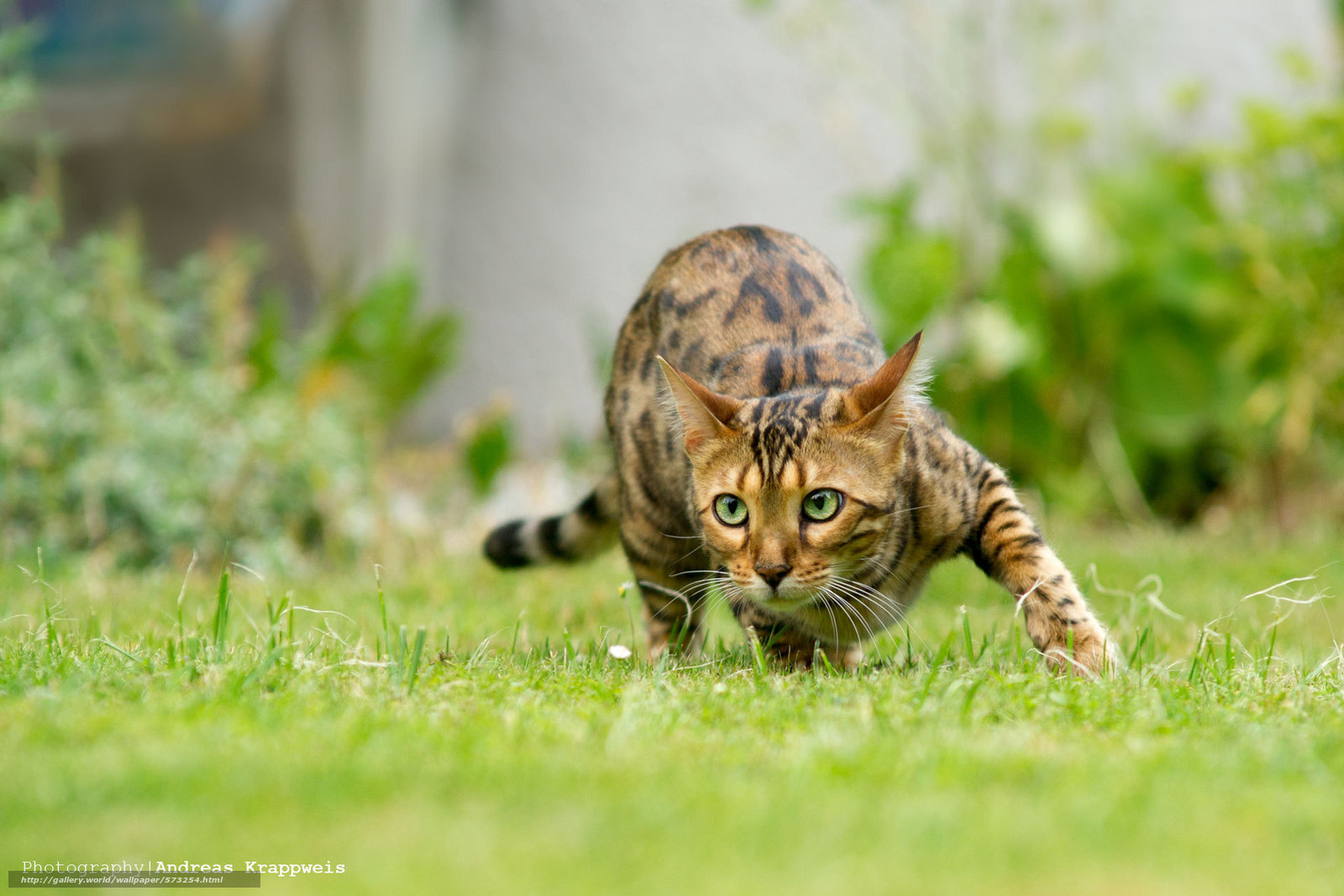 壁紙をダウンロード 動物 自然 Cote 猫 デスクトップの解像度のための無料壁紙 19x1280 絵