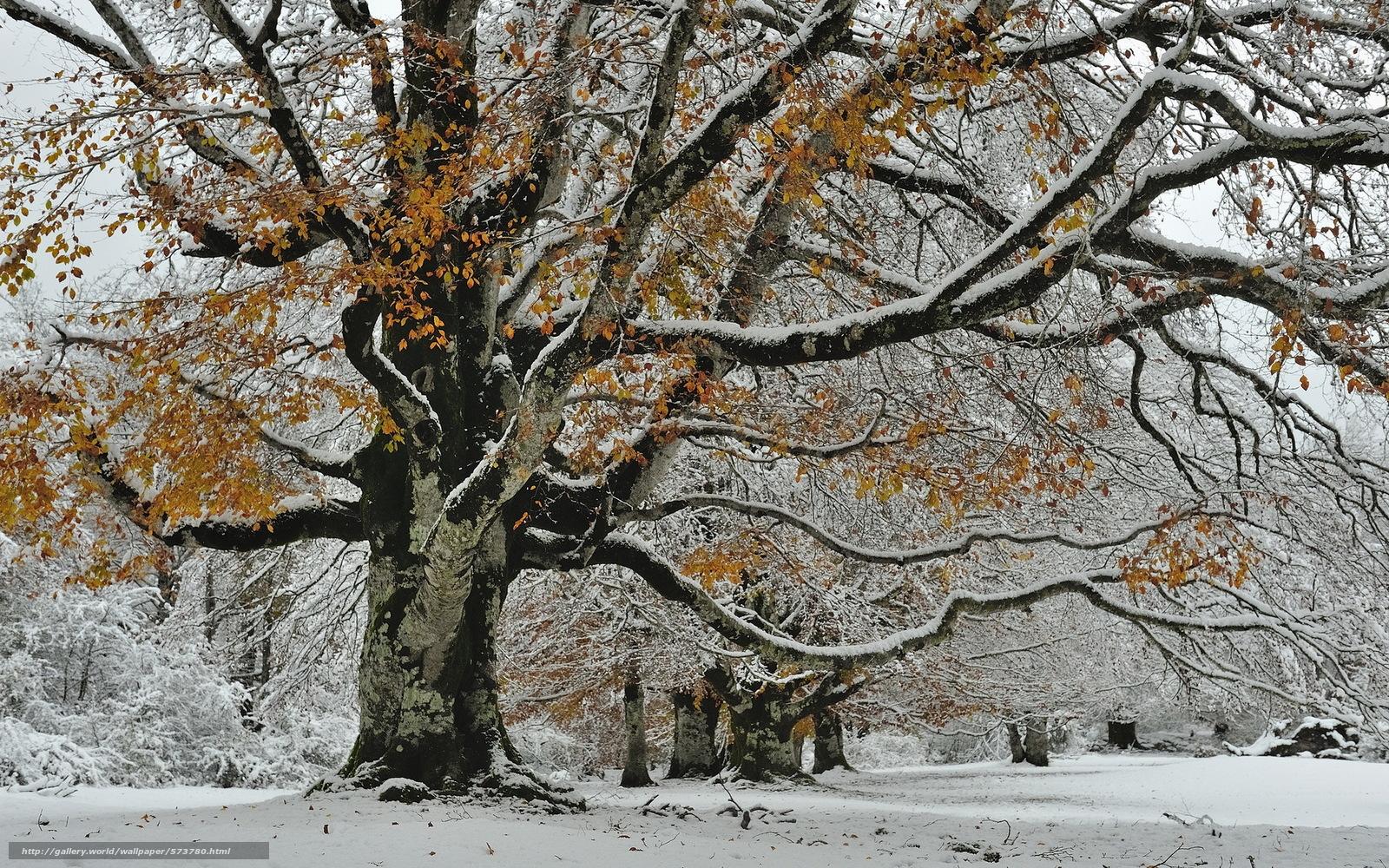 Скачать обои природа,  снег,  осень,  дерево бесплатно для рабочего стола в разрешении 1920x1200 — картинка №573780