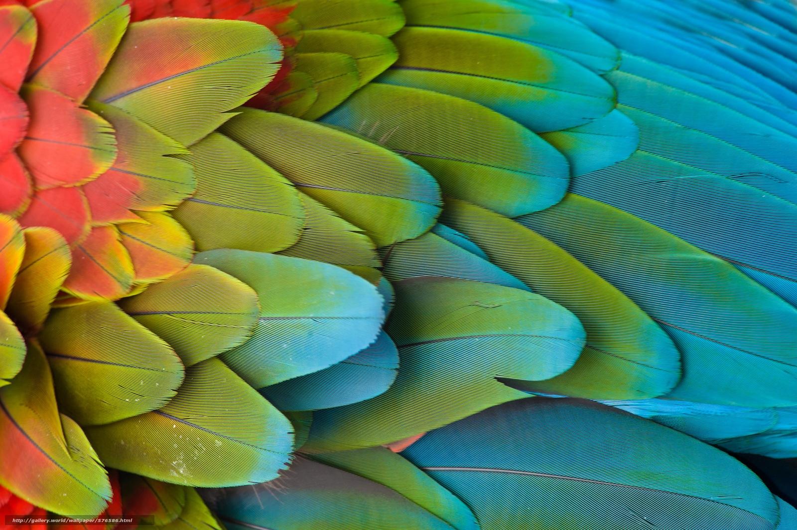 Скачать обои крыло,  попугай,  перья бесплатно для рабочего стола в разрешении 8512x5664 — картинка №576586