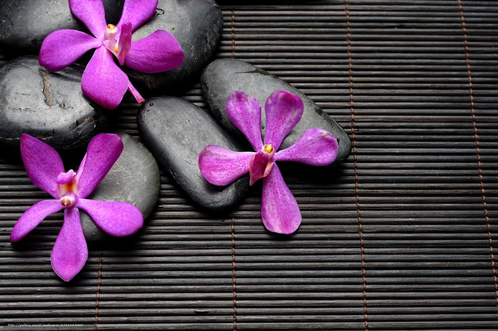 Wallpaper steine blumen  Download Hintergrund Blumen, Steine, spa Freie desktop Tapeten in ...