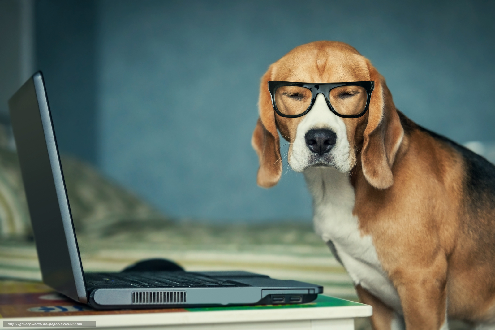 Скачать обои собака,  ноутбук,  очки бесплатно для рабочего стола в разрешении 6020x4012 — картинка №576958