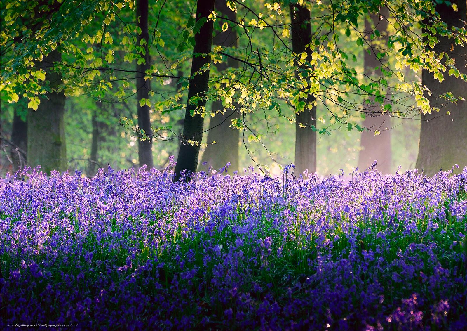 Scaricare gli sfondi alberi fiori primavera maggio for Sfondi desktop gratis primavera