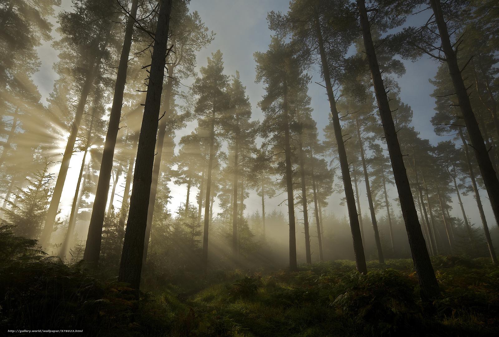 scaricare gli sfondi natura,  sole,  foresta,  alberi Sfondi gratis per la risoluzione del desktop 2048x1383 — immagine №578023