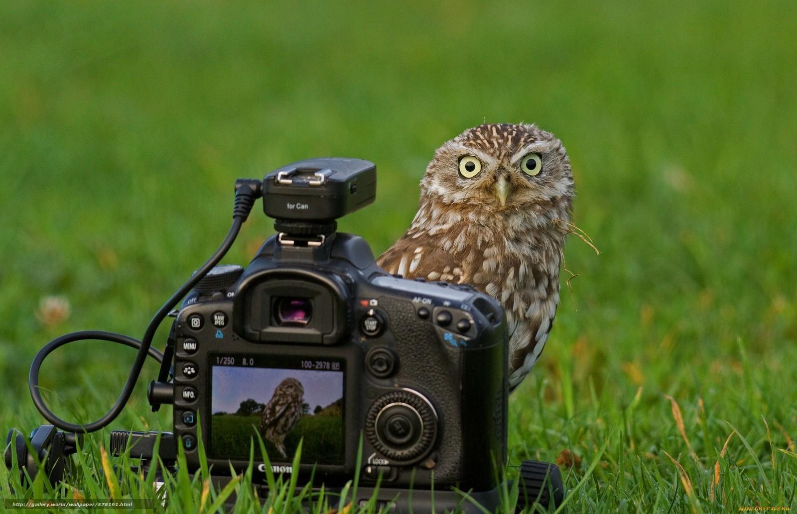 Descargar gratis mirar.,  cámara,  hierba,  búho Fondos de escritorio en la resolucin 2048x1322 — imagen №578191