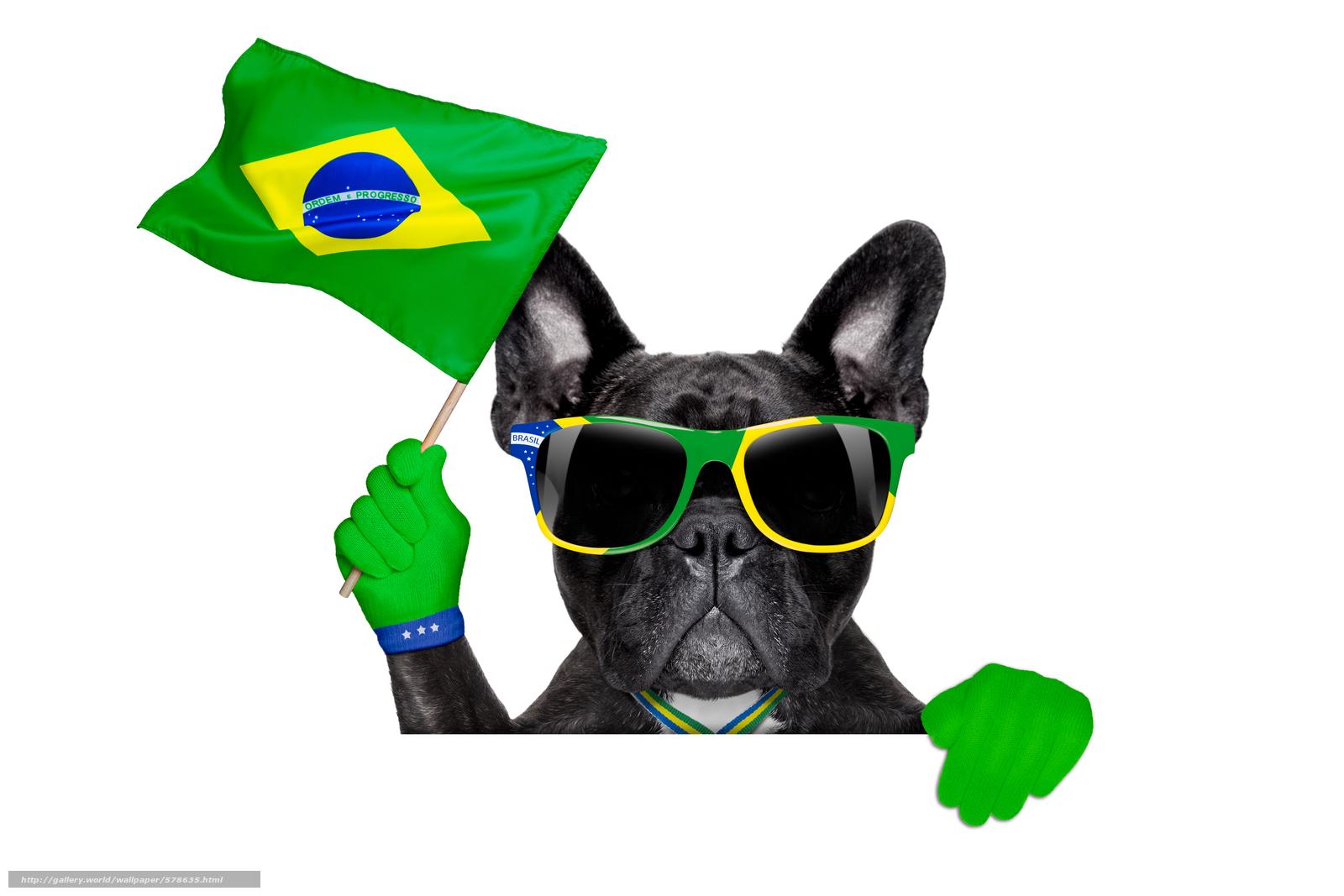Скачать обои очки,  собака бесплатно для рабочего стола в разрешении 6000x4000 — картинка №578635