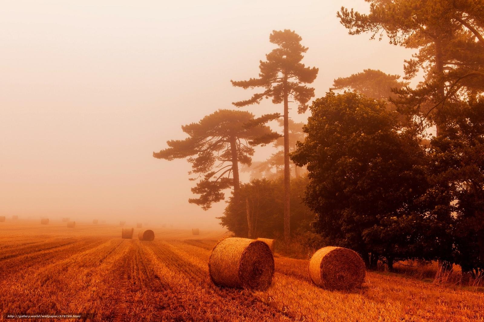 Скачать обои пейзаж,  солома,  природа,  пшеница бесплатно для рабочего стола в разрешении 2048x1365 — картинка №578709