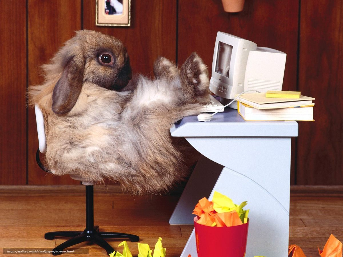 Descargar gratis conejo,  lugar de trabajo,  ordenador,  oficina Fondos de escritorio en la resolucin 1600x1200 — imagen №57989