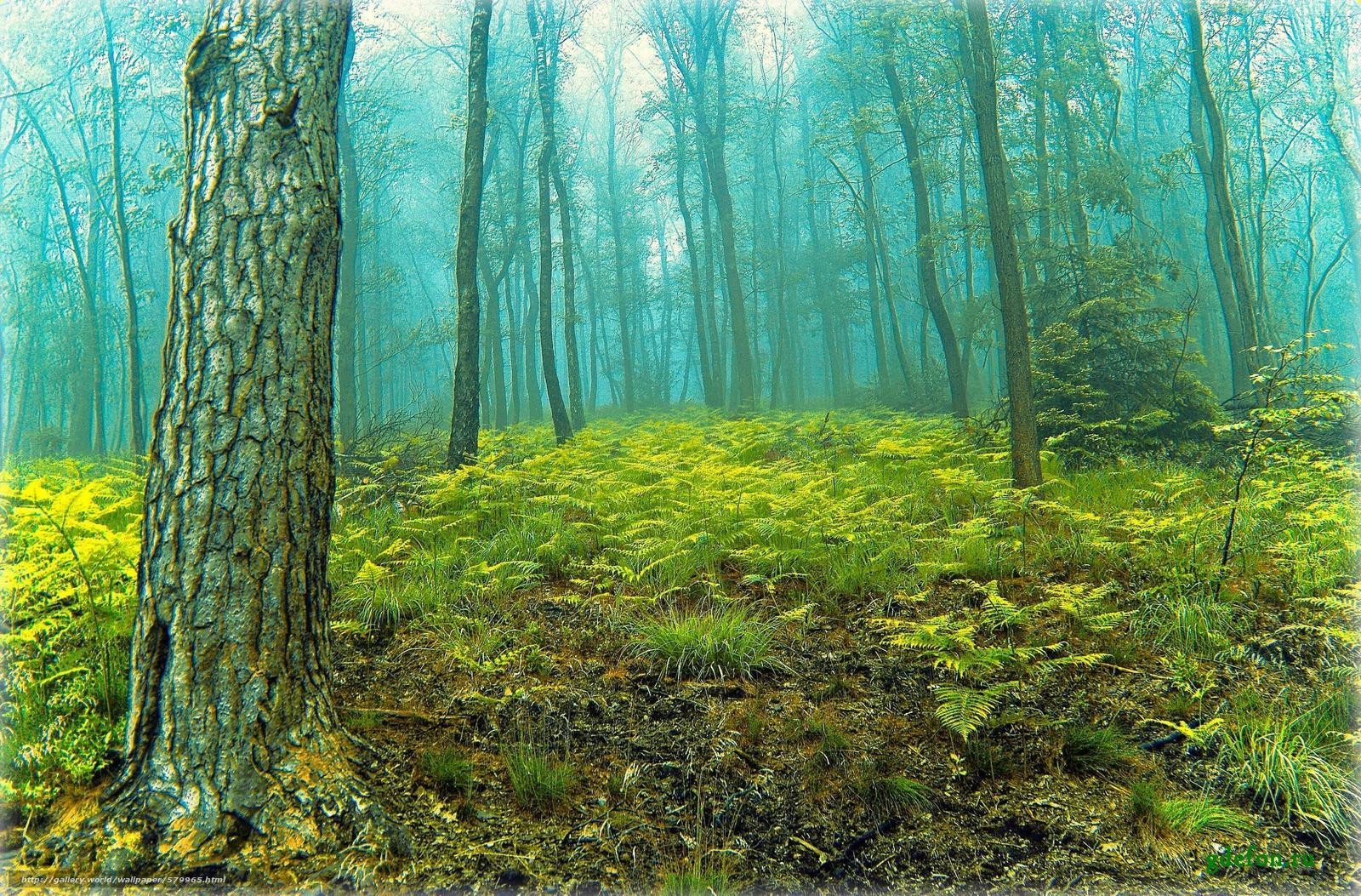 Descargar gratis bosque,  árboles,  niebla,  naturaleza Fondos de escritorio en la resolucin 2724x1793 — imagen №579965