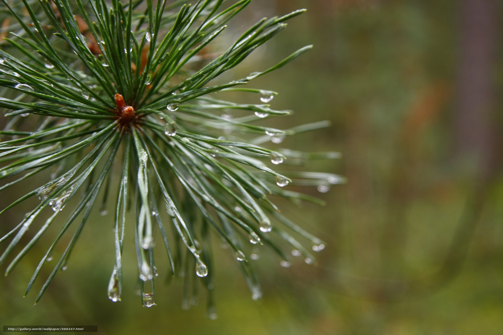 Download wallpaper morning,  forest,  after rain,  Macro free desktop wallpaper in the resolution 3888x2592 — picture №580247