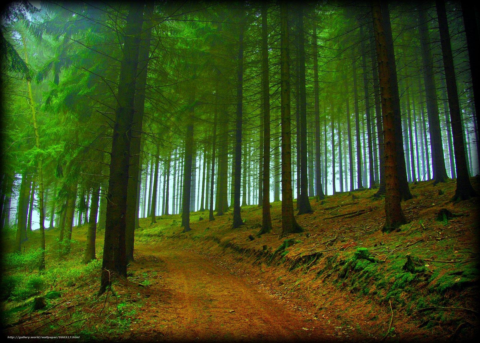 下载壁纸 森林,  树,  道路,  性质 免费为您的桌面分辨率的壁纸 2798x2000 — 图片 №580317