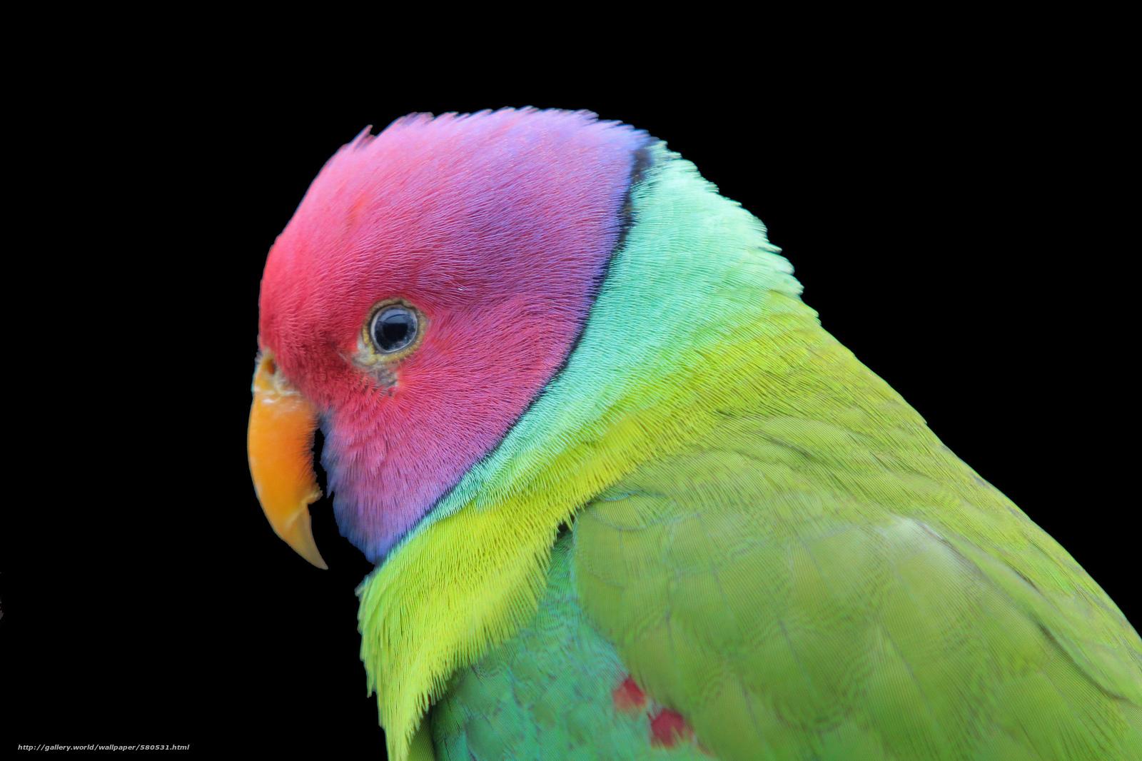 Descargar gratis pájaro,  color,  loro,  fondo negro Fondos de escritorio en la resolucin 2048x1365 — imagen №580531