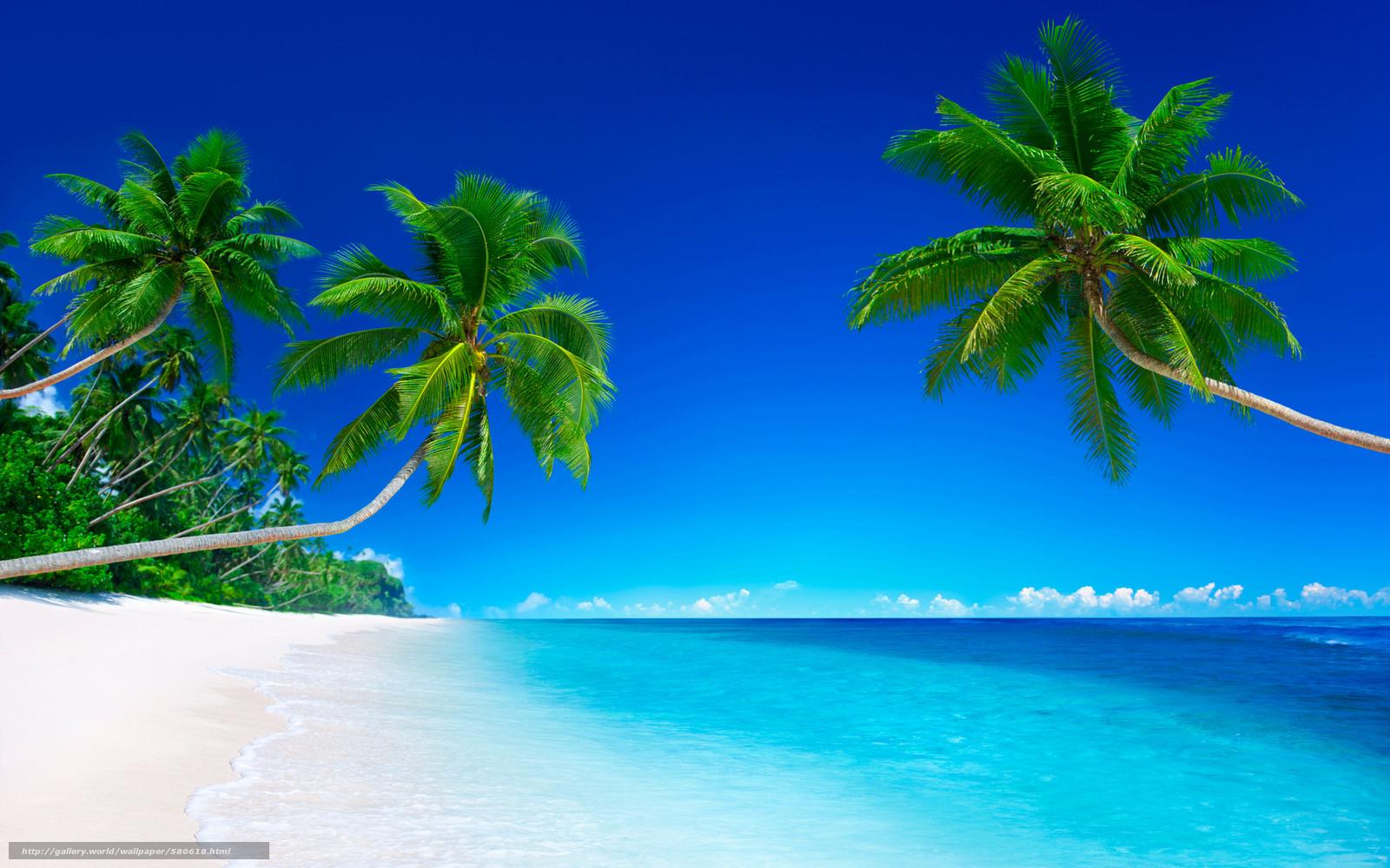 Scaricare gli sfondi palm beach mare puntellare palme for Foto per desktop mare