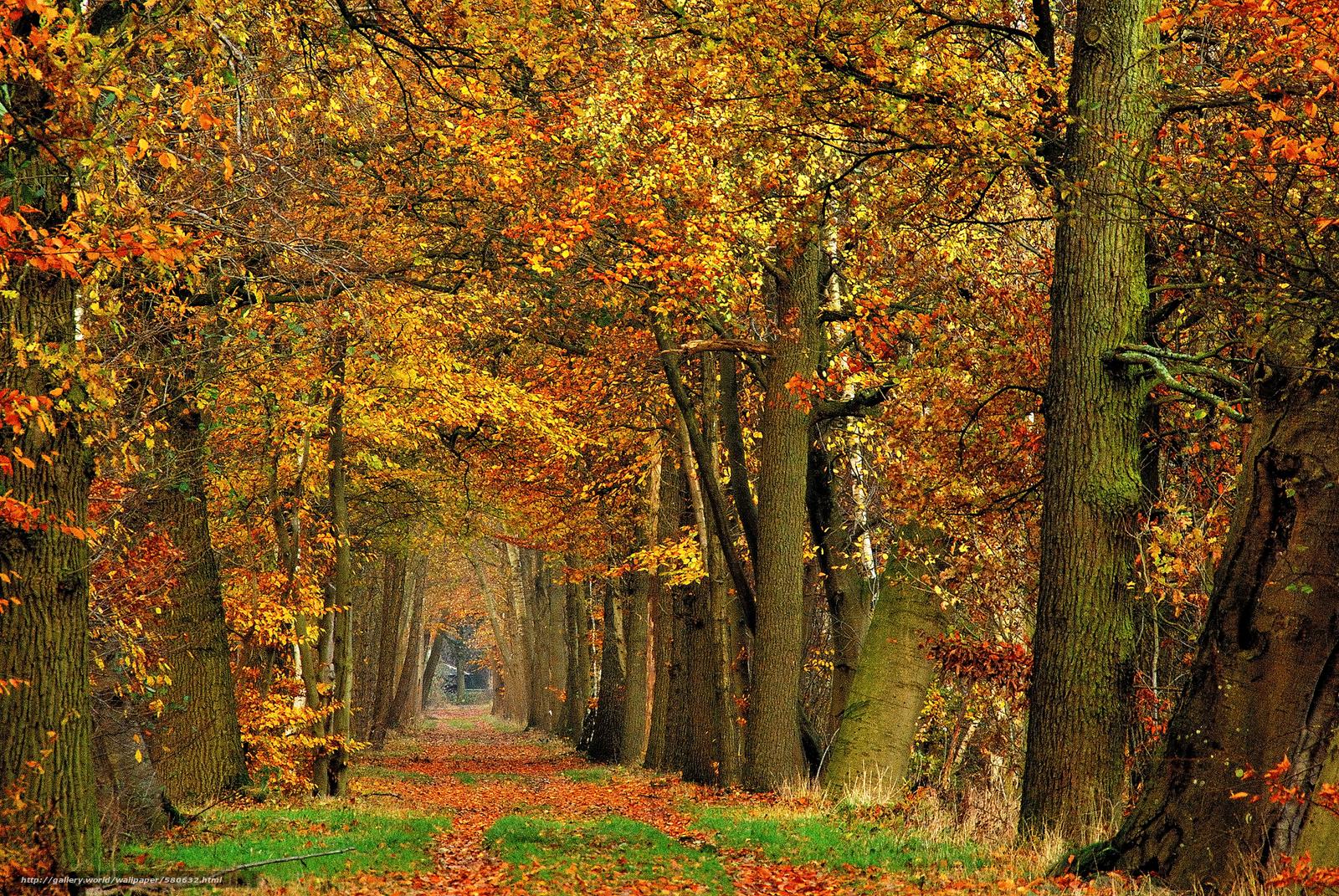 Скачать обои лес,  деревья,  дорога,  природа бесплатно для рабочего стола в разрешении 1936x1296 — картинка №580632
