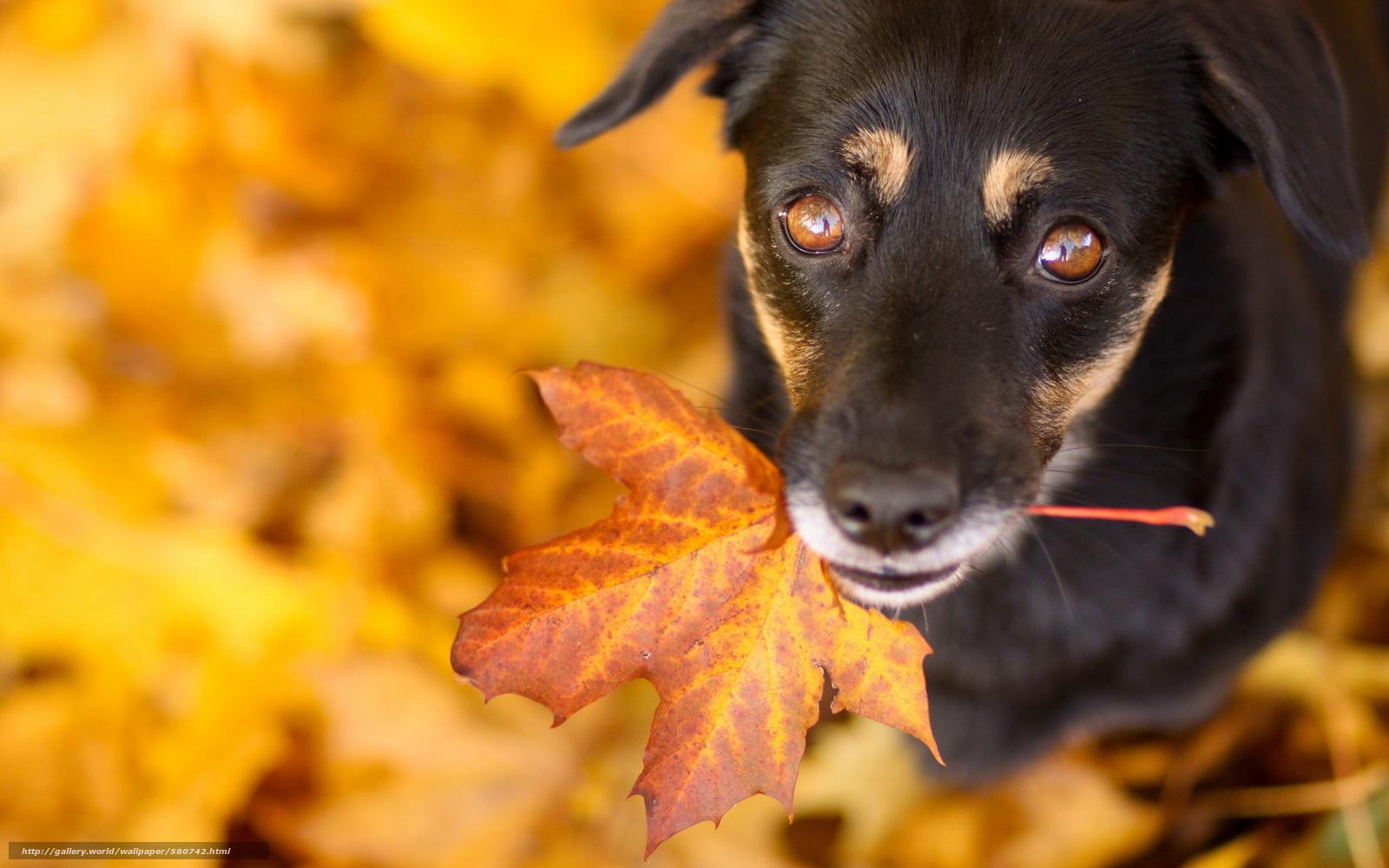 Скачать обои друг,  лист,  взгляд,  собака бесплатно для рабочего стола в разрешении 2560x1600 — картинка №580742