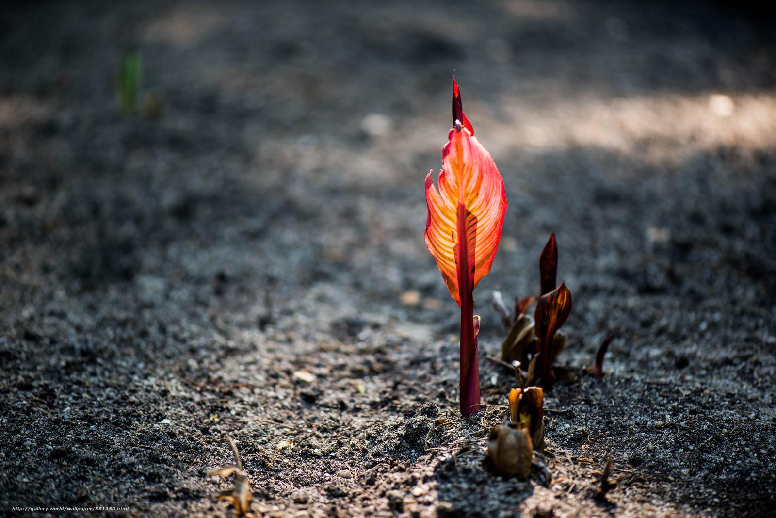 Скачать обои растение,  боке,  росток,  красный бесплатно для рабочего стола в разрешении 2048x1367 — картинка №581350