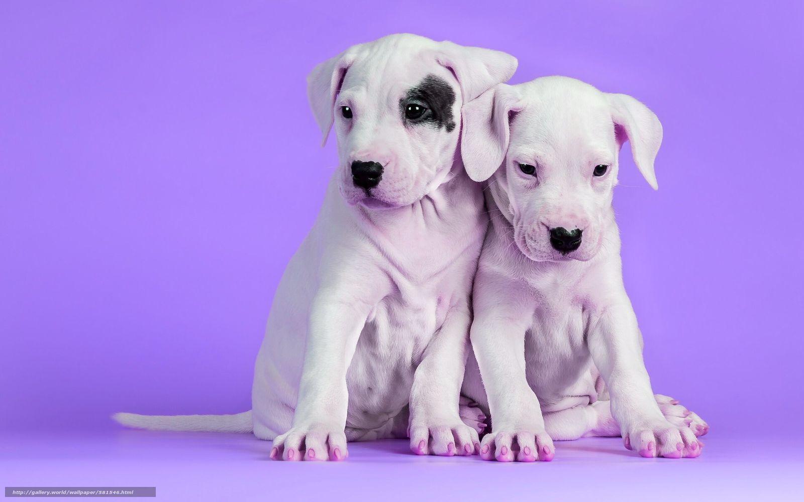 壁紙をダウンロード 子犬,  背景,  犬 デスクトップの解像度のための無料壁紙 2560x1600 — 絵 №581546