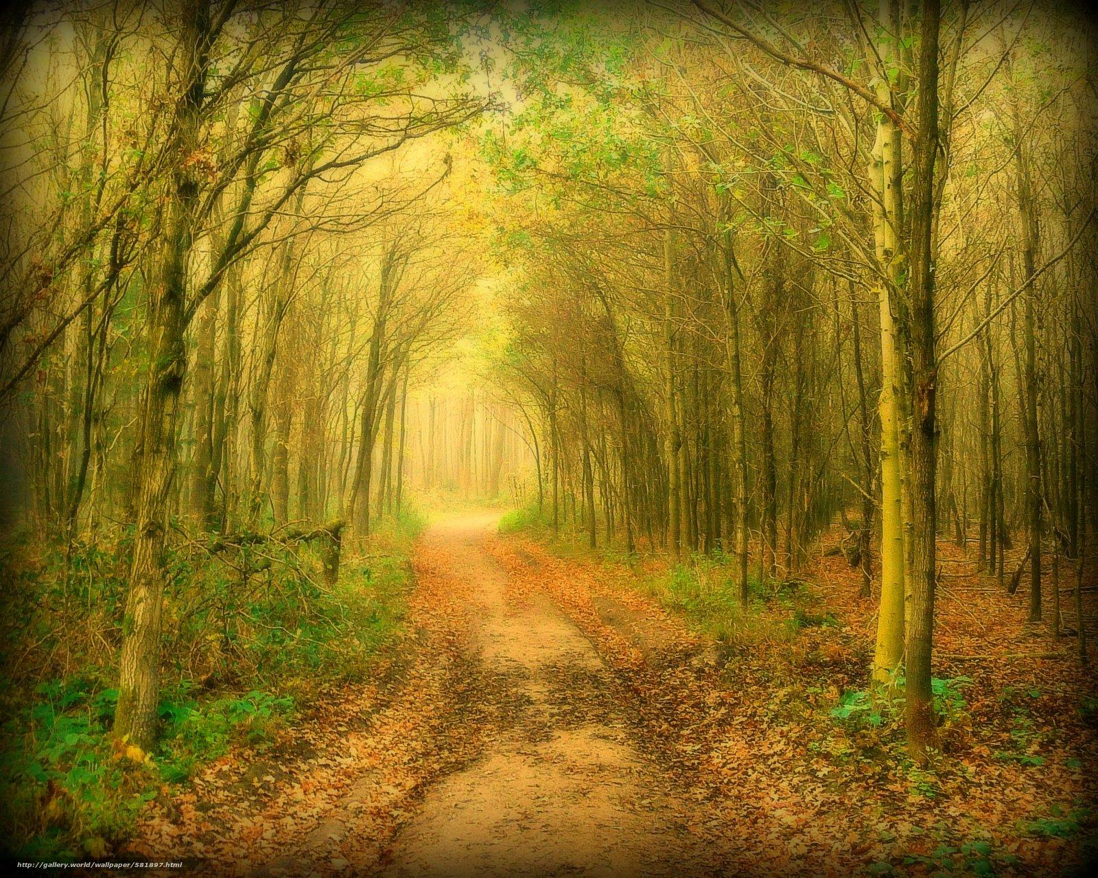 下载壁纸 森林,  树,  道路,  性质 免费为您的桌面分辨率的壁纸 2221x1775 — 图片 №581897