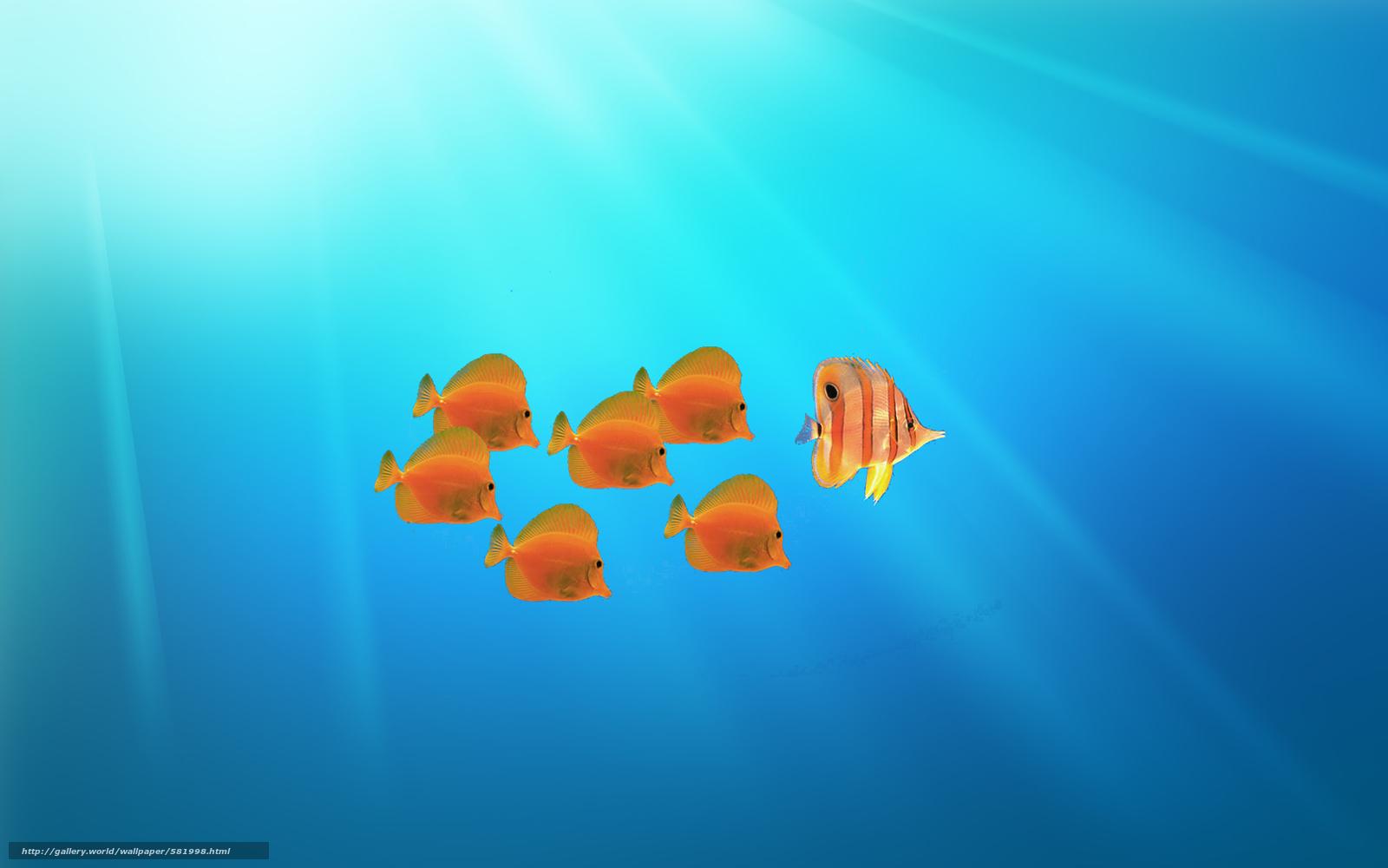 Tlcharger fond d 39 ecran abstraction poisson 3d art fonds d 39 ecran gratuits pour votre rsolution - Follow wallpaper ...