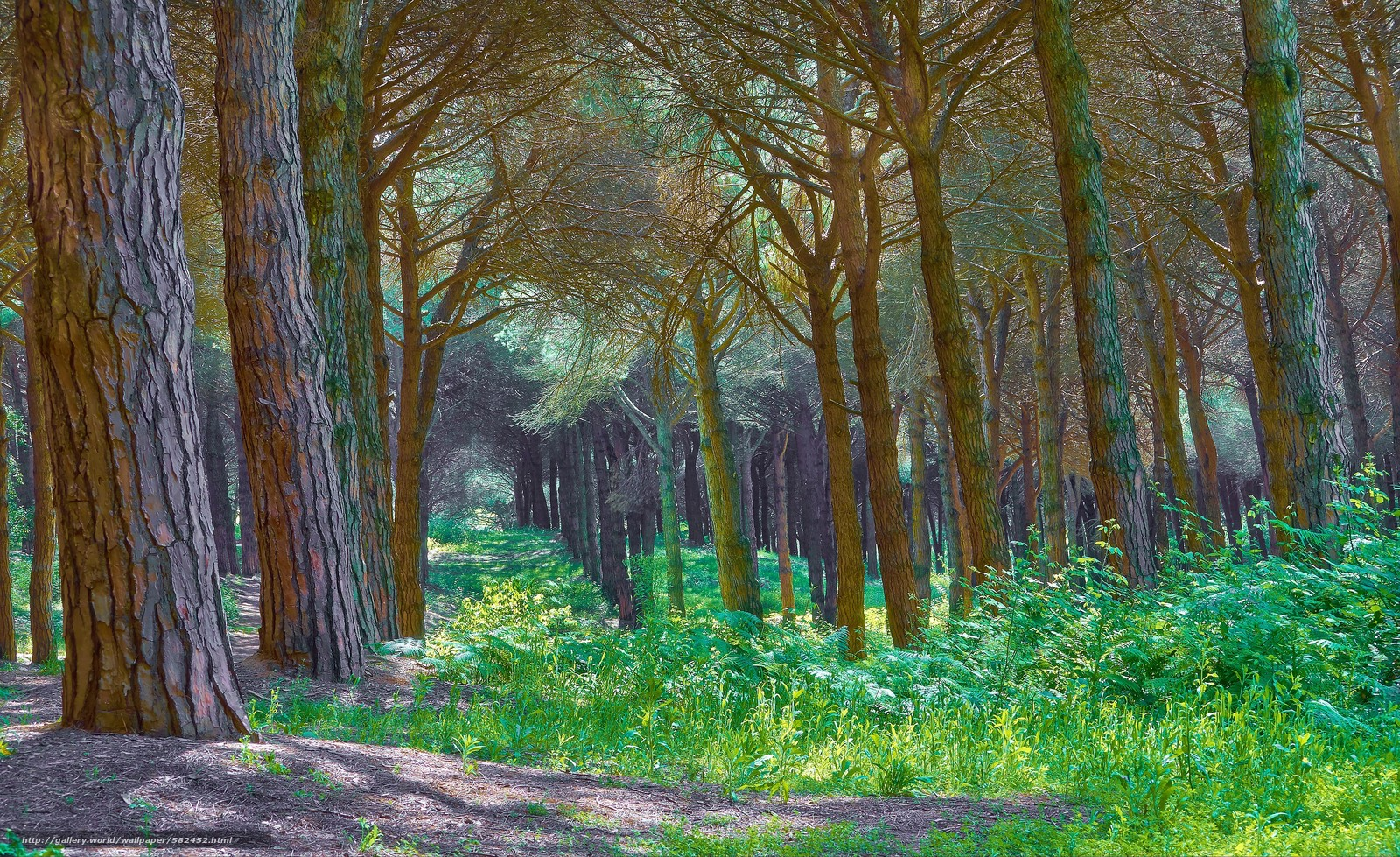 scaricare gli sfondi foresta,  alberi,  natura Sfondi gratis per la risoluzione del desktop 3840x2350 — immagine №582452