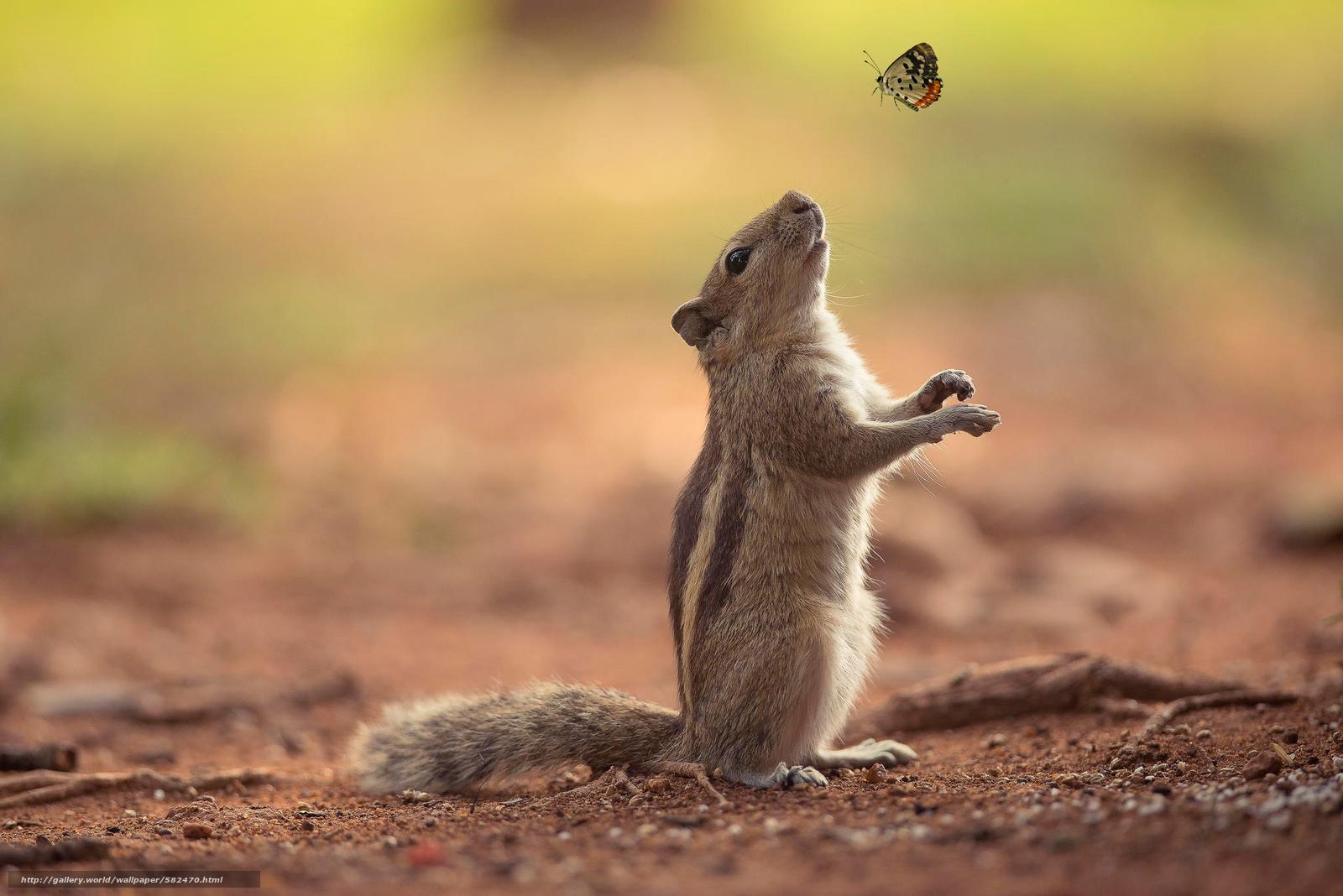 Скачать обои белка,  дружба,  бабочка бесплатно для рабочего стола в разрешении 2048x1367 — картинка №582470