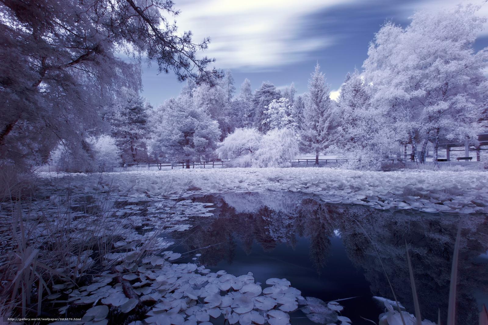 scaricare gli sfondi riflessione,  acqua,  pond,  alberi Sfondi gratis per la risoluzione del desktop 2048x1365 — immagine №583070