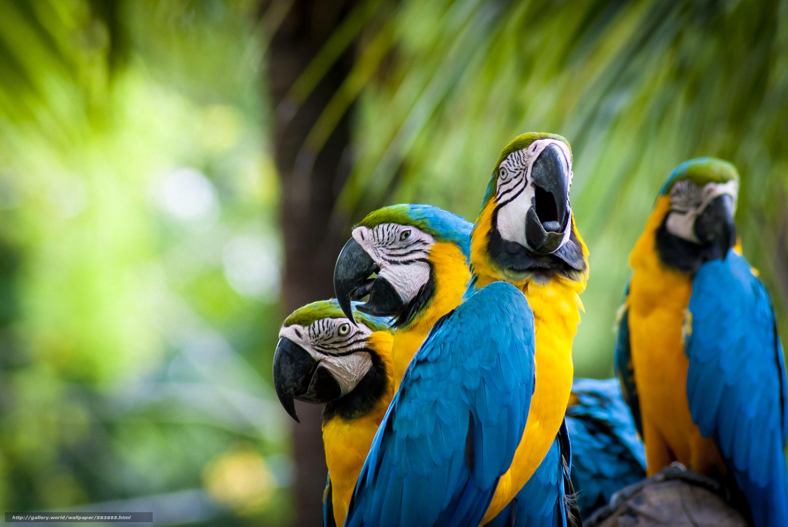 scaricare gli sfondi Pappagalli,  uccelli,  piumaggio Sfondi gratis per la risoluzione del desktop 3872x2592 — immagine №583885