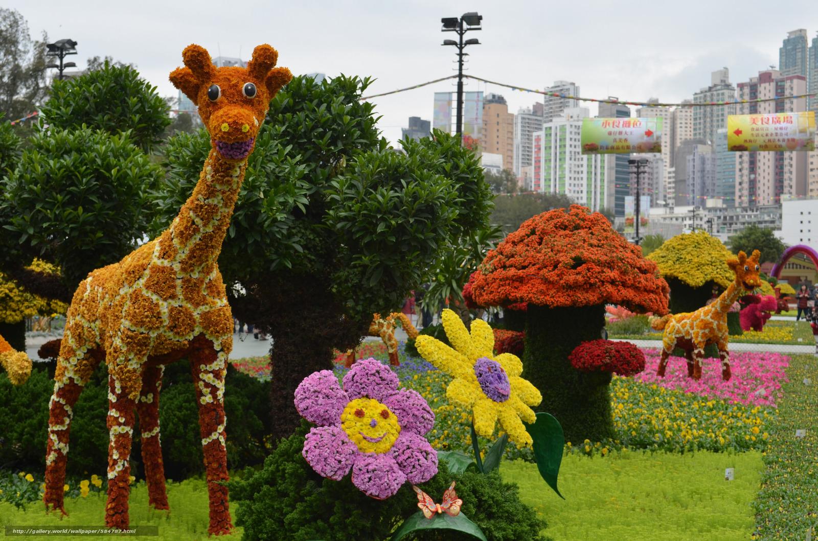 scaricare gli sfondi giraffa,  aiuola,  fiori,  Fiori Sfondi gratis per la risoluzione del desktop 2048x1356 — immagine №584787