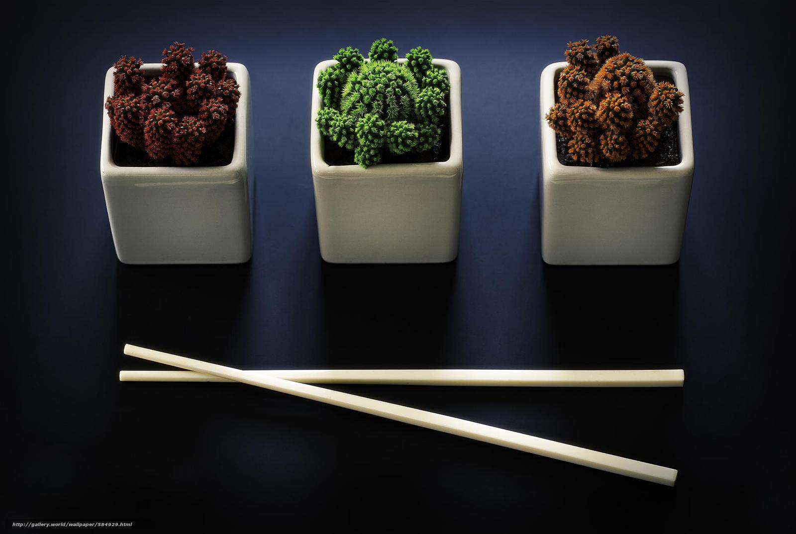 Descargar gratis Sticks,  color,  Cacti Fondos de escritorio en la resolucin 2048x1375 — imagen №584929