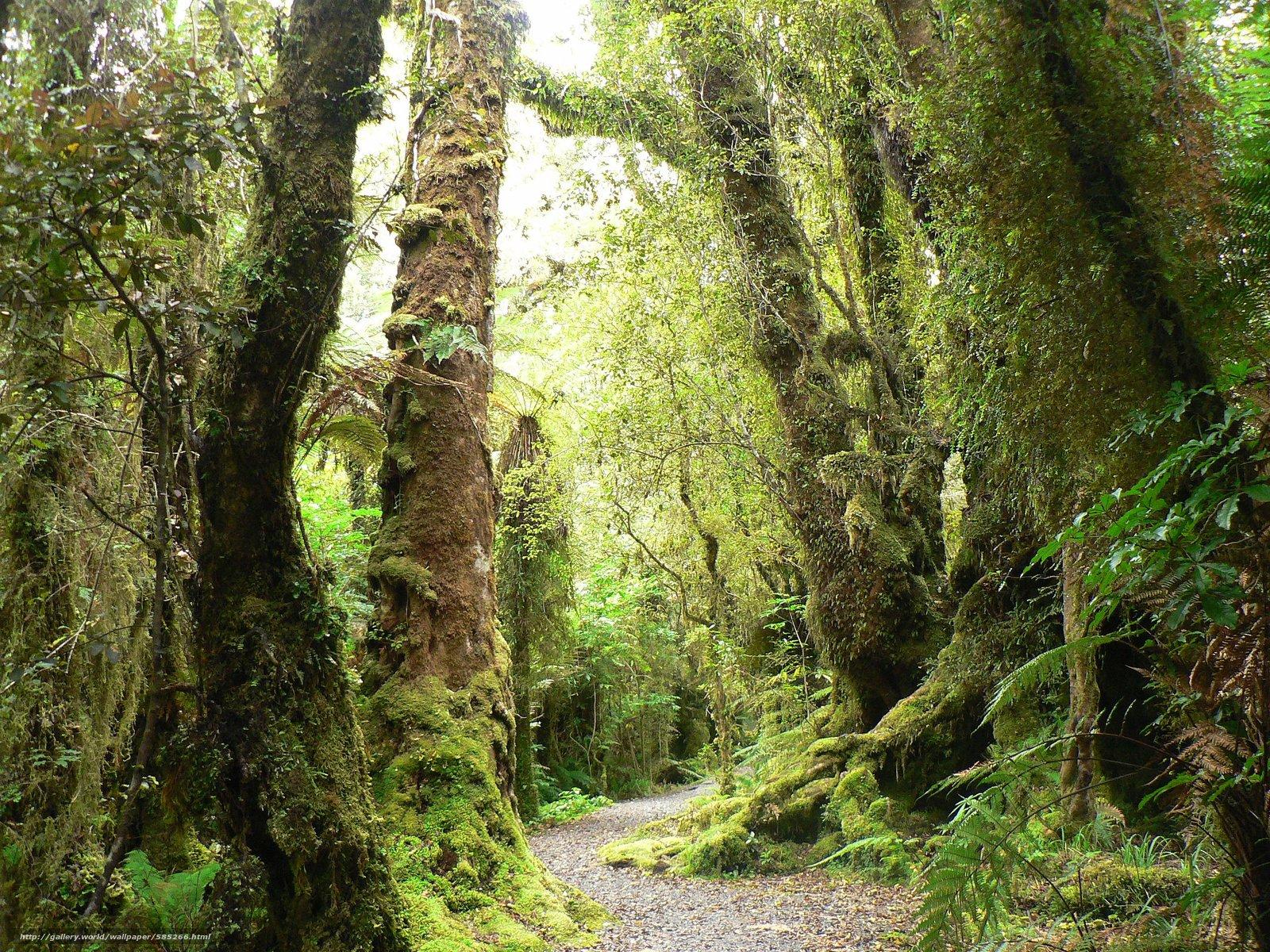 scaricare gli sfondi foresta,  alberi,  stradale,  natura Sfondi gratis per la risoluzione del desktop 2560x1920 — immagine №585266