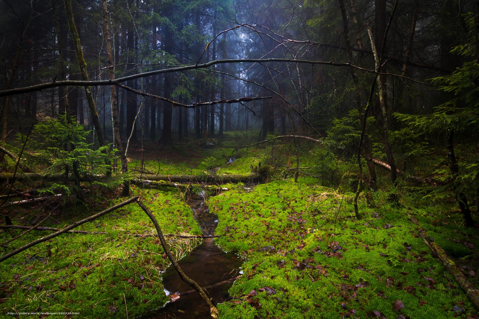 Descargar gratis bosque,  musgo,  árboles,  arroyo Fondos de escritorio en la resolucin 2400x1600 — imagen №585330